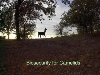 Biosecurity for Camelids