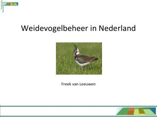Weidevogelbeheer in Nederland