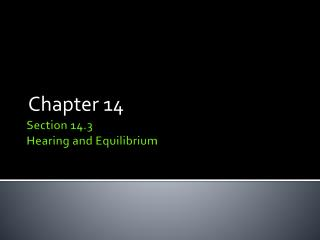 Section 14.3 Hearing and Equilibrium