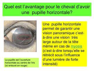 Quel est l'avantage pour le cheval d'avoir une  pupille horizontale?