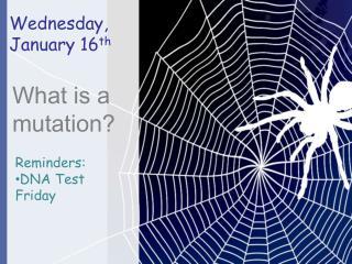 Wednesday,  January  16 th