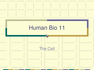 Human Bio 11