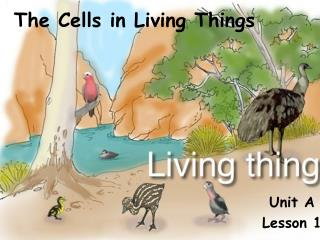 The Cells in Living Things