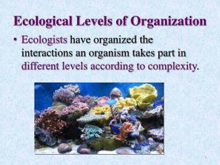 Ecological Levels of Organization