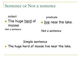 Sentence or Not a sentence