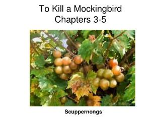 To Kill a Mockingbird Chapters 3-5
