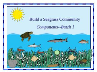 Build a Seagrass Community Components--Batch 1