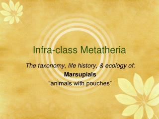 Infra-class Metatheria