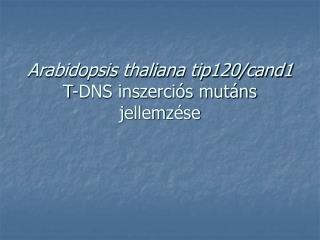 Arabidopsis thaliana tip120/cand1  T-DNS inszerciós mutáns jellemzése