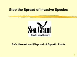 Stop the Spread of Invasive Species