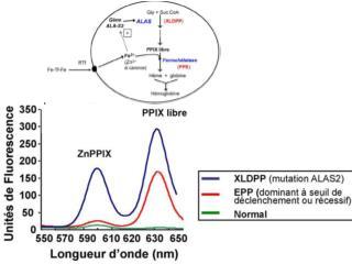 Mutación Dominante puede ser:  Completa perdida de la función del gen (ALELO AMORFICO).