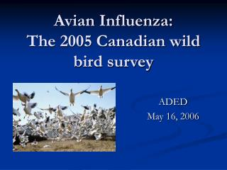 Avian Influenza: The 2005 Canadian wild bird survey