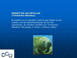 MANATÍ DE LAS ANTILLAS (Trichechus Manatus)