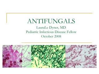 ANTIFUNGALS LauraLe Dyner, MD Pediatric Infectious Disease Fellow October 2008