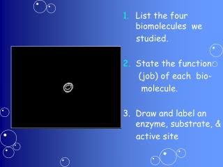 List the four    biomolecules   we      studied. State the function        (job) of each  bio-