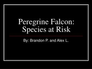 Peregrine Falcon: Species at Risk