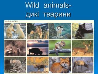Wild  animals- дикі  тварини