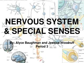 NERVOUS SYSTEM & SPECIAL SENSES