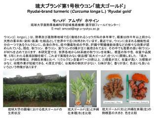 琉大ブランド第 1 号秋ウコン「琉大ゴールド」 Ryudai-brand turmeric ( Curcuma longa  L.) 'Ryudai gold'