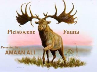 Pleistocene  Fauna