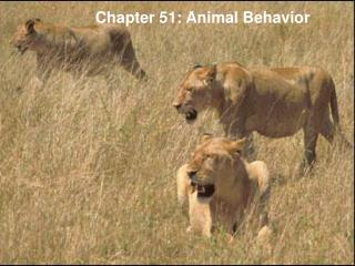 Chapter 51: Animal Behavior