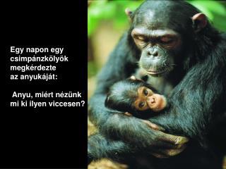 Egy napon egy  csimpánzkölyök  megkérdezte  az anyukáját : Anyu, miért nézünk