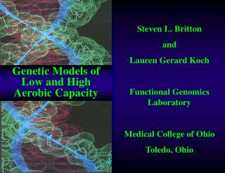 Steven L. Britton  and Lauren Gerard Koch Functional Genomics Laboratory Medical College of Ohio