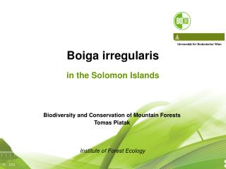 Boiga irregularis in the Solomon Islands