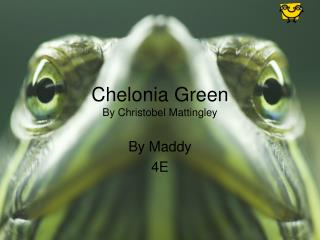 Chelonia Green By Christobel Mattingley