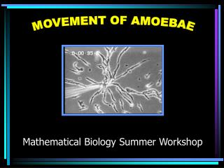 MOVEMENT OF AMOEBAE