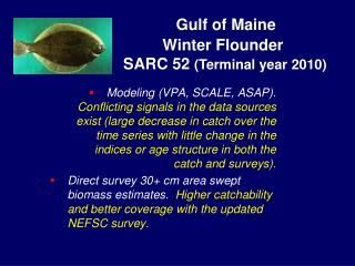 Gulf of Maine Winter Flounder  SARC 52  (Terminal year 2010)