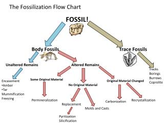 The Fossilization Flow Chart