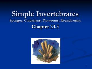 Simple Invertebrates Sponges, Cnidarians, Flatworms, Roundworms