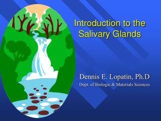 Introduction to the Salivary Glands