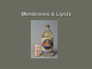 Membranes  Lipids
