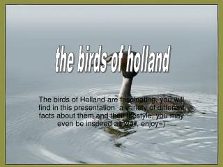 the birds of holland