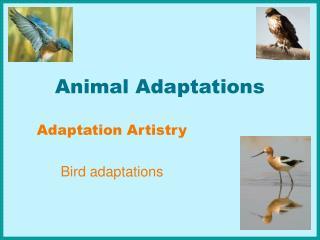 top 10 animal adaptations