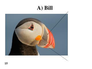 A) Bill