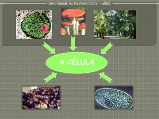 Diversidade na Biodiversidade – célula