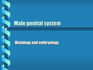Male genital system