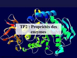 TP2 : Propriétés des enzymes