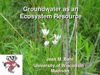 Groundwater as an Ecosystem Resource