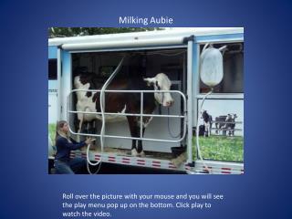 Milking  Aubie