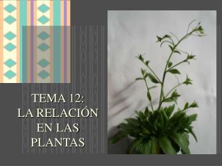 TEMA 12:  LA RELACIÓN  EN LAS PLANTAS