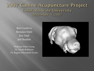 2007 Canine Acupuncture Project Colorado State University December 4, 2007