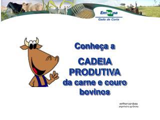 Conheça a  CADEIA PRODUTIVA da carne e couro bovinos