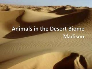 Animals in the Desert Biome