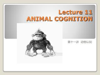 Lecture 11  ANIMAL COGNITION