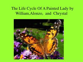 The Life Cycle Of A Painted Lady by William,Alonzo,  and  Chrystal