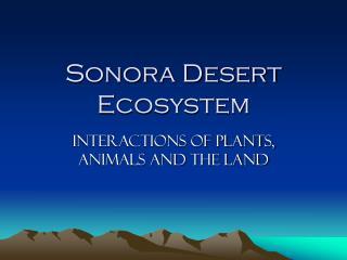 Sonora Desert Ecosystem